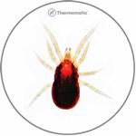 Dermansyssus Gallinae